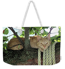 Weekender Tote Bag featuring the photograph Catnap Time by Thomas Woolworth