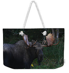 Weekender Tote Bag featuring the photograph Checking You Out by Doug Lloyd