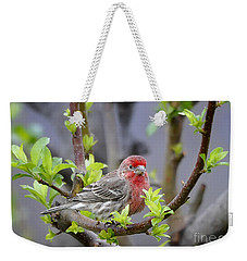 Weekender Tote Bag featuring the photograph Content by Nava Thompson