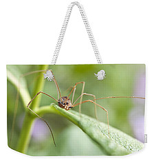 Creepy Crawly Spider Weekender Tote Bag by Jeannette Hunt