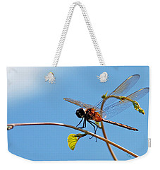 Dragonfly On A Vine Weekender Tote Bag by Kay Lovingood