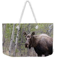 Weekender Tote Bag featuring the photograph Early Spring by Doug Lloyd