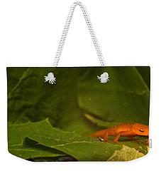 Easterm Newt Nnotophthalmus Viridescens 4 Weekender Tote Bag
