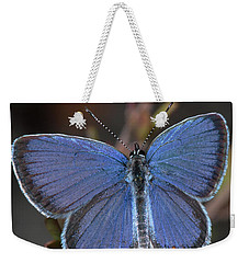 Eastern Tailed Blue Butterfly Weekender Tote Bag