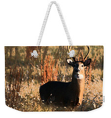 Weekender Tote Bag featuring the painting Eight Point Buck by Karen Harrison