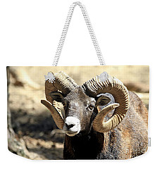 European Big Horn - Mouflon Ram Weekender Tote Bag by Teresa Zieba