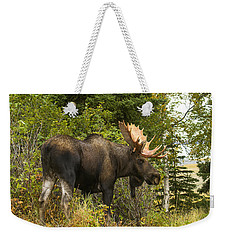 Weekender Tote Bag featuring the photograph Fall Bull Moose by Doug Lloyd