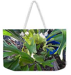 Fern With Blue Bucket Weekender Tote Bag by Patricia Greer