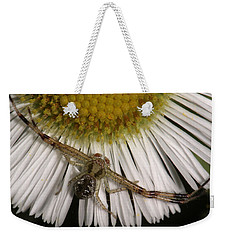 Weekender Tote Bag featuring the photograph Flower Spider On Fleabane by Daniel Reed