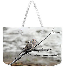 Weekender Tote Bag featuring the photograph Good Morning Dove by Elizabeth Winter