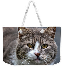Gray Tabby Tux Cat Weekender Tote Bag