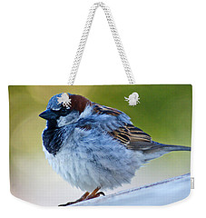Weekender Tote Bag featuring the photograph Guard Bird by Colleen Coccia
