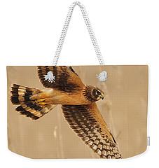 Harrier Over Golden Grass Weekender Tote Bag