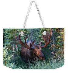 Weekender Tote Bag featuring the photograph Hunting Some Munchies by Doug Lloyd