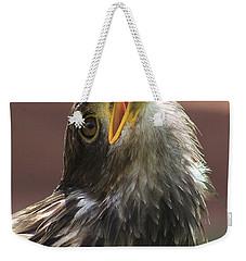 Juvenile Bald Eagle Weekender Tote Bag by Alyce Taylor