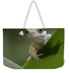 Weekender Tote Bag featuring the photograph Juvenile Grey Treefrog by Daniel Reed