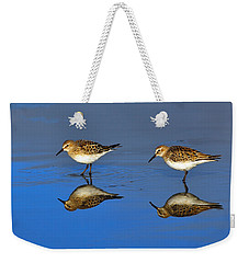 Juvenile White-rumped Sandpipers Weekender Tote Bag