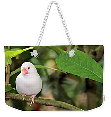 Weekender Tote Bag featuring the photograph Little White Bird by Rosalie Scanlon