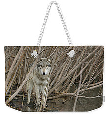 Looking Wild Weekender Tote Bag