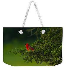 Male Cardinal In Pine Tree Weekender Tote Bag