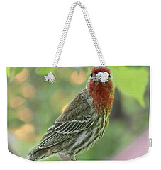 Weekender Tote Bag featuring the photograph Male House Finch by Debbie Portwood
