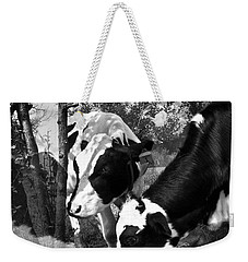 Matilda And Zoey In The Warm Afternoon Sun Weekender Tote Bag