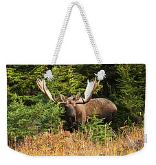 Weekender Tote Bag featuring the photograph Monster In The Hemlocks by Doug Lloyd
