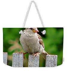Weekender Tote Bag featuring the photograph Morning Visitor by Rory Sagner