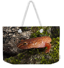 Northern Spring Salamander Gyrinophilus Weekender Tote Bag by Pete Oxford