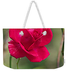 Weekender Tote Bag featuring the photograph One Rose by Joseph Yarbrough