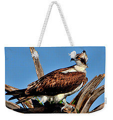 Osprey On A Windy Morning Weekender Tote Bag