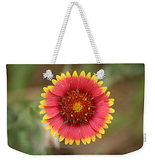 Weekender Tote Bag featuring the photograph Painted Blanket Flower by Donna  Smith