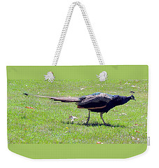 Weekender Tote Bag featuring the photograph Peacock Striding by Bonnie Muir