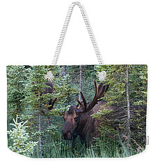 Weekender Tote Bag featuring the photograph Peeking Through The Spruce by Doug Lloyd