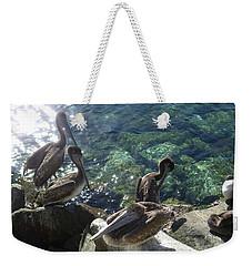 Pelicans Weekender Tote Bag