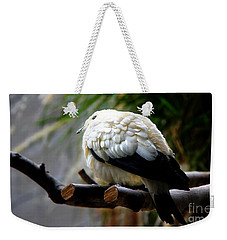 Weekender Tote Bag featuring the photograph Pied Imperial Pigeon by Davandra Cribbie