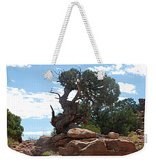 Weekender Tote Bag featuring the photograph Pine Tree By The Canyon by Dany Lison