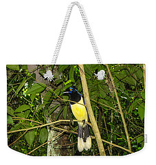 Weekender Tote Bag featuring the photograph Plush-crested Jay by David Gleeson