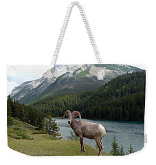 Weekender Tote Bag featuring the photograph Portrait Of A Bighorn Sheep At Lake Minnewanka  by Laurel Best