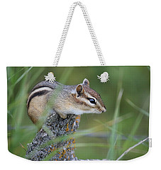 Weekender Tote Bag featuring the photograph Portrait Of A Chipmunk by Penny Meyers