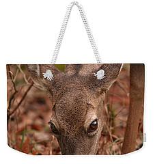 Portrait Of  Browsing Deer Two Weekender Tote Bag