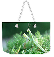 Weekender Tote Bag featuring the photograph Praying Beauty by Tom Roderick