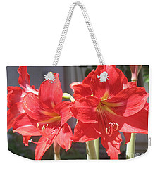 Weekender Tote Bag featuring the photograph Red Amaryllis by Kume Bryant