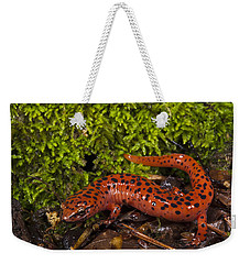Red Salamander Pseudotriton Ruber Weekender Tote Bag by Pete Oxford