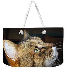 Weekender Tote Bag featuring the photograph Runcius- The King Kitty by Ausra Huntington nee Paulauskaite