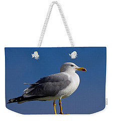 Weekender Tote Bag featuring the photograph Seagull by David Gleeson