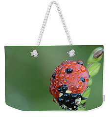 Seven-spotted Lady Beetle On Grass With Dew Weekender Tote Bag