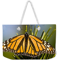 Single Monarch Butterfly Weekender Tote Bag by Darcy Michaelchuk