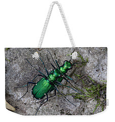 Weekender Tote Bag featuring the photograph Six-spotted Tiger Beetles Copulating by Daniel Reed