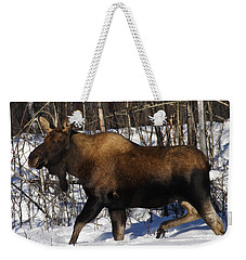 Weekender Tote Bag featuring the photograph Snow Moose by Doug Lloyd